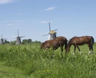 drie molens met twee paarden1
